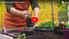 Comment planter vos tomates ?